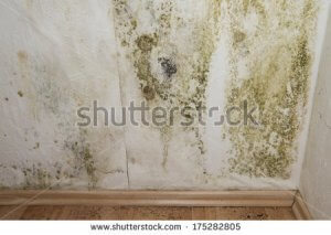an image of mildew upon walls