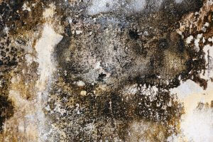 An image showing damp and mould on a wall due to someone not knowing how to get rid of damp