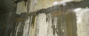an image of damp and moisture on a basement wall